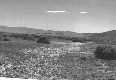 Old photograph of 40 mile desert