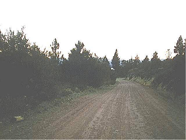 Photograph of old road in Dog Valley