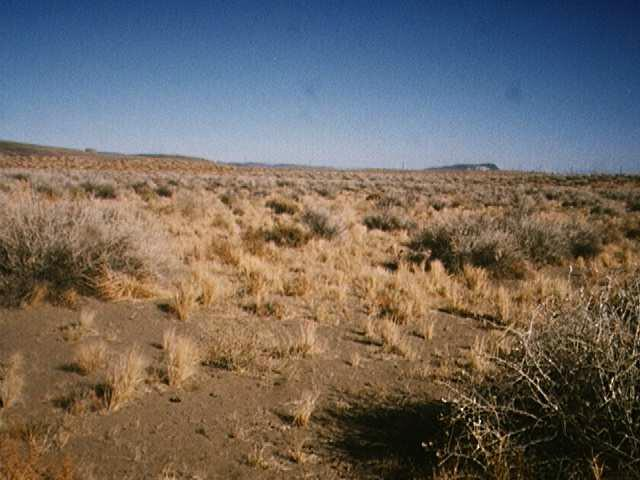 Photograph of Sand Hills