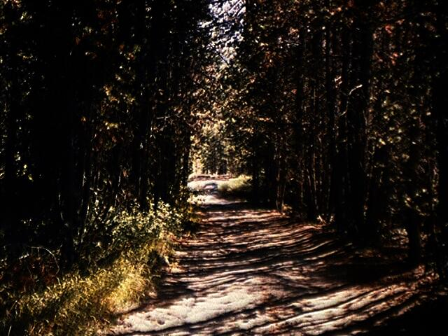 Photograph of old trail through forest